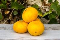 Mandarina Ecológica de la península