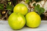 Naranja de zumo Ecológicas de Telde