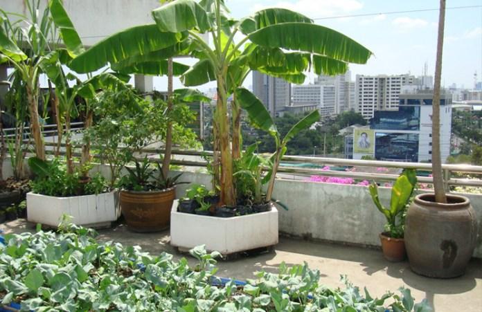 rooftop kitchen garden India