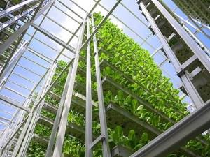 vertical-farming-4