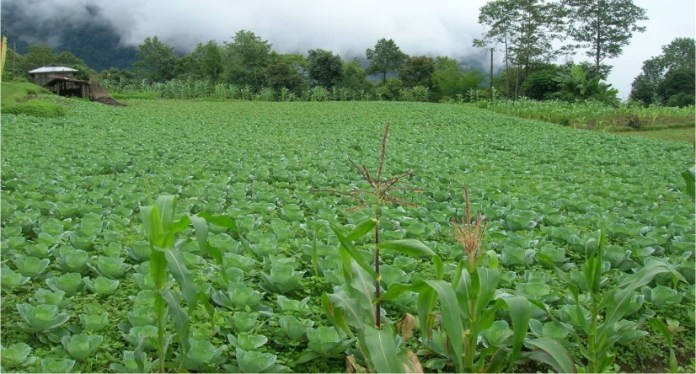 Sikkim-become-fully-organic-state