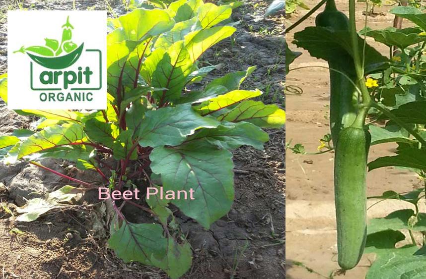 Arpit-Organic-farm-Ahmedabad