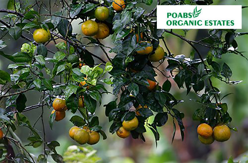 Poabs Organic estates