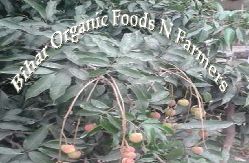Bihar Organic Food & Farmers