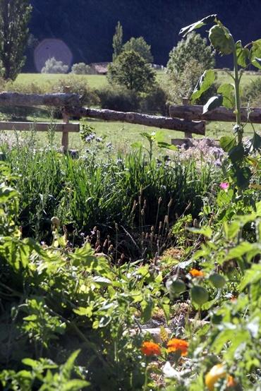 Jardin permaculture