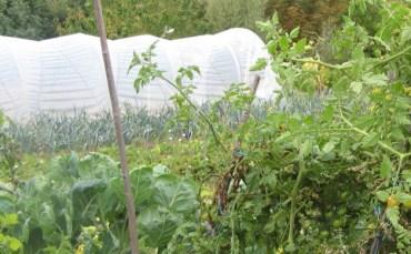 lien-agriculture