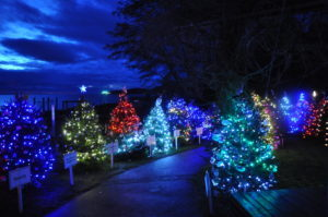 dundarave-festival-of-lights-300x199