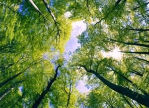 Treecological