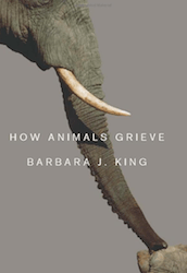 how_animals_grieve_small