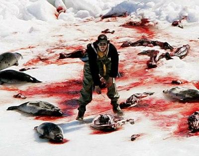 strage di cuccioli di foca