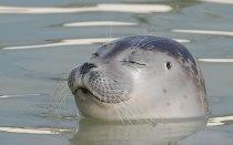 Zeehonden kijken in Ecomare Texel