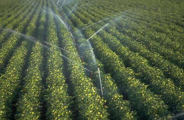 Spray-Irrigation-Middle-East