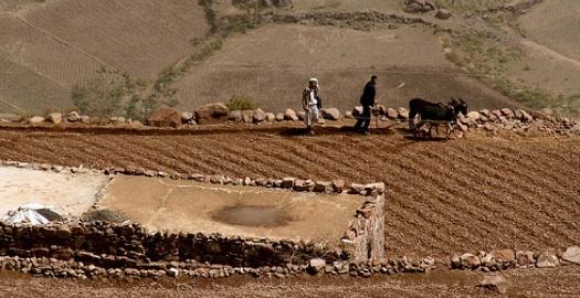 fight against desertification