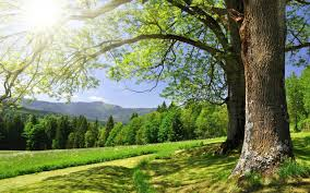 environment-conservation-islam