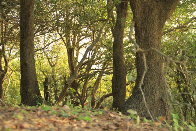 forest-jordan