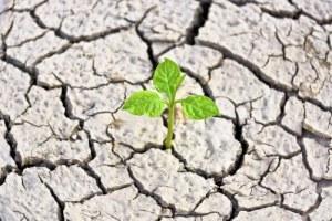 climate-governance