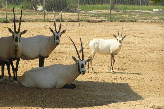 wildlife-bahrain
