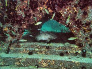 Artificial-Reef