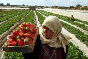 agriculture-palestine