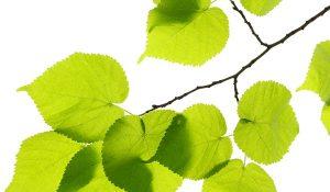 green-lifestyle-arabic