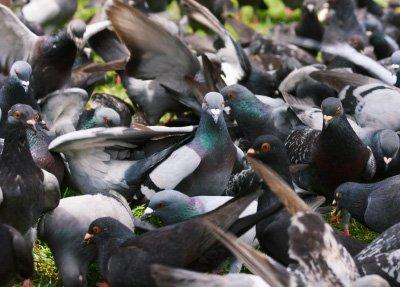 pigeonproblem