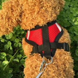 Adjustable Soft and Comfortable Small Dog Vest Harness Fashion Nylon Mesh Harness S/M/L