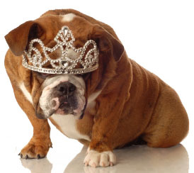Tiaras for Bulldogs