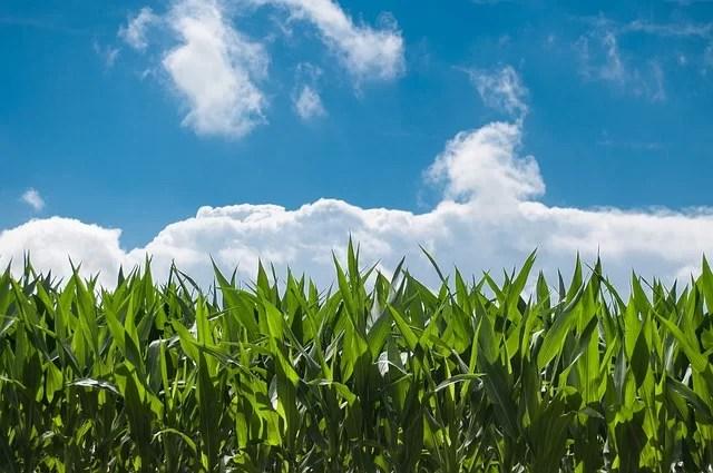 Kringlooplandbouw is een kwestie van precisie