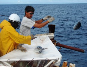 Bruno Leroy releases a tagged tuna
