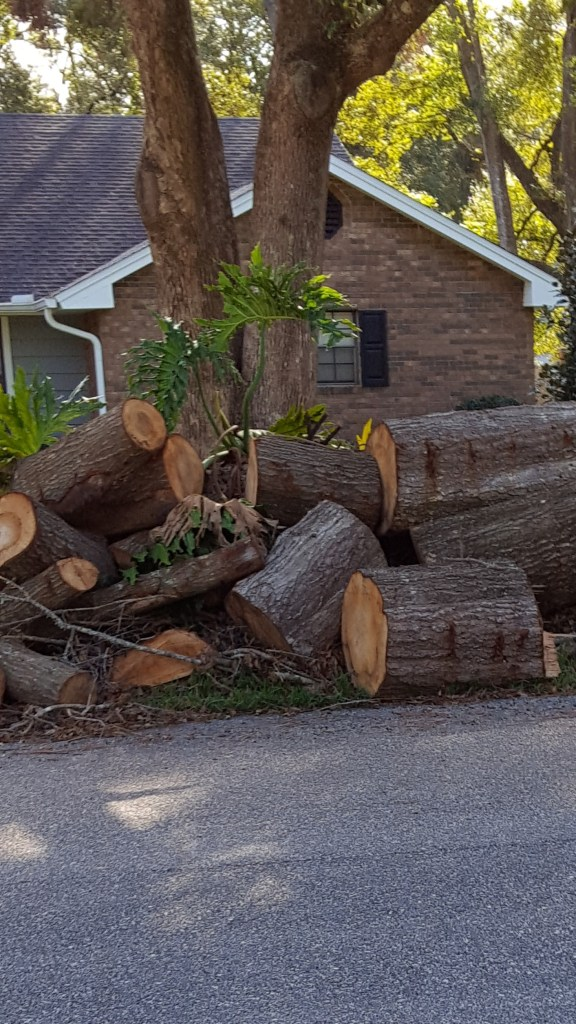 Tree after hurricane cut up with chainsaw