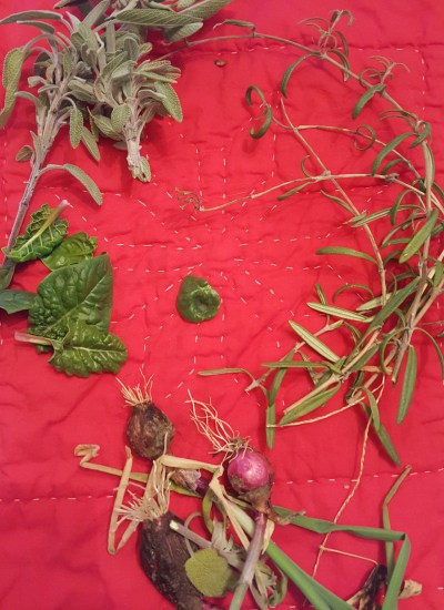 Harvested herbs