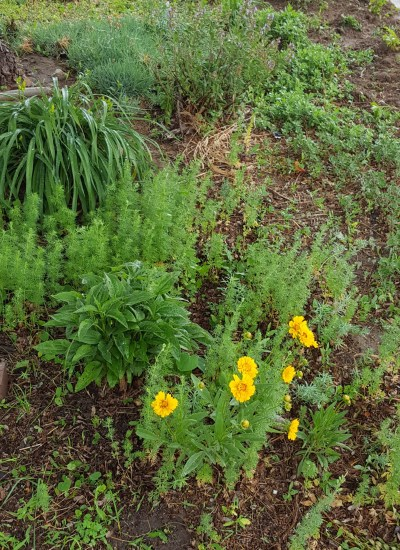 Yellow flowers in foreground of garden bed