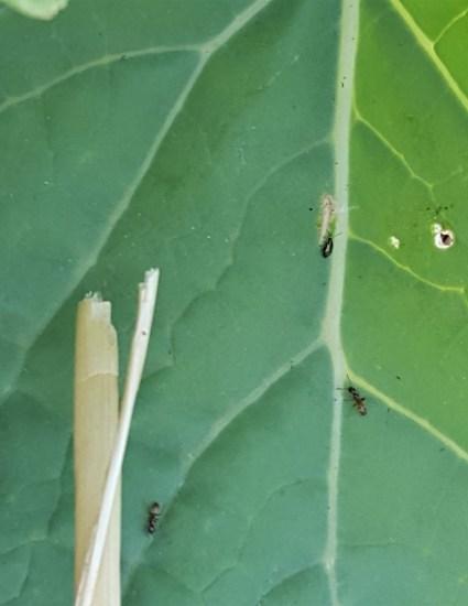 Small pests on leaf