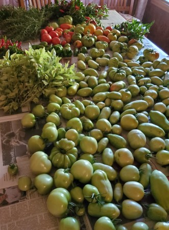 Table full of produce harvested just before a killing frost