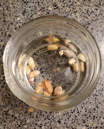 Peanuts soaking in measuring cup