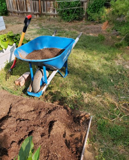 Soil in wheelbarrow