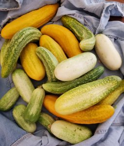 Cucumbers of all sizes