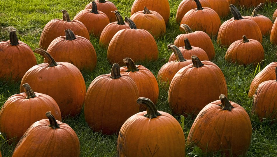 The 5 Best Healthy Pumpkin Recipes
