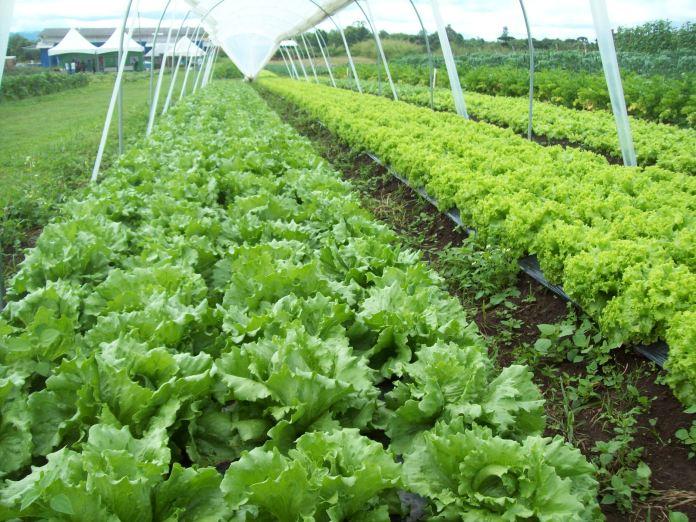 Primeira patente verde da UFPR, biofertilizante orgânico à base de microalgas é opção sustentável para a agricultura