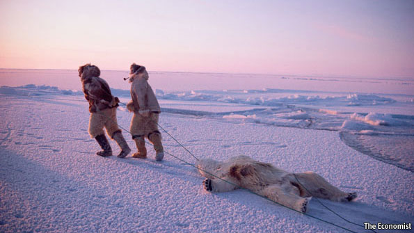 Canada's Inuit - Polar-bear politics   The Americas   The Economist
