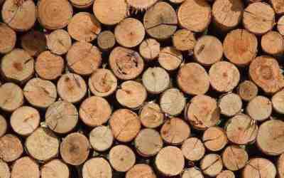 Quel bois choisir pour bricoler ou fabriquer un meuble ?