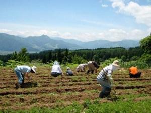 畝作りと大豆の苗を植えている様子です。見晴らし最高!