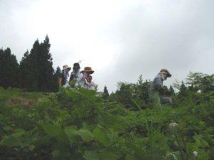 みんなで草をかき分けてワラビを探しました。
