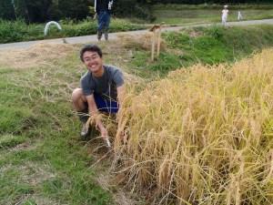 オーナー田んぼの端っこから刈り取り作業を始めるオーナーの一人山田さん
