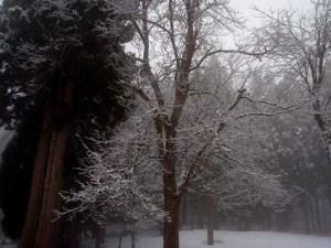 冬の早い頃の景色のようでした。