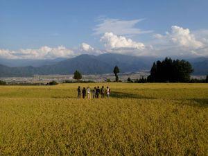 第七番のポスターに使われた絶景の棚田で、色づいた稲穂と透き通った空に見とれる。