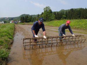 苗を植える場所を決めるための筋を付ける「ロッカク」。まっすぐに進めるのが難しい。地元のベテランが手本を示す。