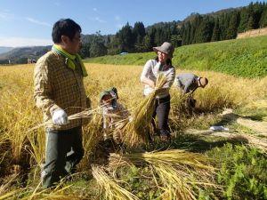 カエルやイナゴを追いかけながら稲刈りを楽しむ家族連れ