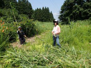 使われなくなった棚田の跡地をビオトープとして活用している大明神地区でヨシを刈る