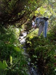 水路に落ちた草を取り除くのは、慣れない人には難しい作業。水路の中に入って手づかみで草を拾い上げる人もいました。